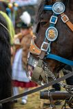 Leonhardi decorated big cold blooded horses Bad Toelz Germany. Bavaria royalty free stock image