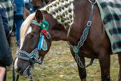 Leonhardi decorated big cold blooded horses Bad Toelz Germany. Bavaria royalty free stock photography