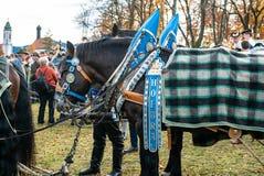Leonhardi decorated big cold blooded horses Bad Toelz Germany. Bavaria stock image