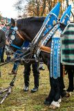 Leonhardi decorated big cold blooded horses Bad Toelz Germany. Bavaria royalty free stock photos