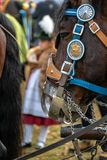 Leonhardi decorou cavalos blooded frios grandes Toelz mau Alemanha fotos de stock royalty free