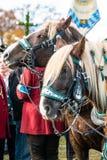 Leonhardi ha decorato i grandi cavalli blooded freddi cattivo Toelz Germania immagine stock libera da diritti