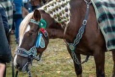 Leonhardi ha decorato i grandi cavalli blooded freddi cattivo Toelz Germania fotografia stock libera da diritti