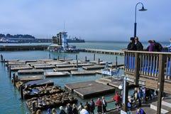 Leoni di mare della California sul pilastro 39 a San Francisco Fotografie Stock