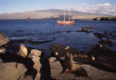 Leoni di mare e barca a vela Fotografia Stock Libera da Diritti