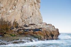 Leoni di mare su litorale roccioso Immagine Stock Libera da Diritti