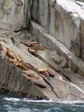 Leoni di mare sulla roccia Fotografia Stock Libera da Diritti