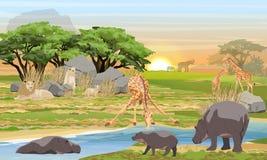 Leoni, giraffe, ippopotami ed elefanti nella savana africana illustrazione vettoriale
