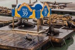 Leoni marini fotografie stock libere da diritti