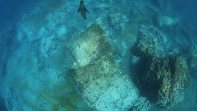 Leoni marini che giocano underwater video d archivio