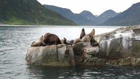 Leoni marini di Steller della colonia di corvi Isola in oceano Pacifico vicino alla penisola di Kamchatka stock footage