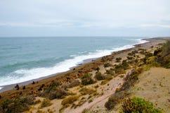 Leoni marini a Punta Norte Fotografie Stock