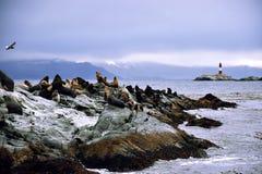 Leoni marini su una roccia Fotografia Stock