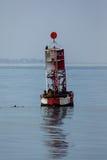 Leoni marini sulla boa del canale Fotografia Stock
