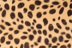 leopard γουνών ανασκόπησης σύσταση Στοκ εικόνα με δικαίωμα ελεύθερης χρήσης