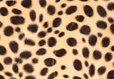 leopard γουνών ανασκόπησης σύσταση Στοκ Φωτογραφία