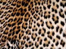 leopard δέρμα Στοκ φωτογραφία με δικαίωμα ελεύθερης χρήσης