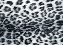 leopard δέρμα Στοκ Εικόνα