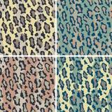 leopard κάλυψης πρότυπο Στοκ Φωτογραφίες