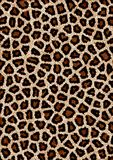 leopard πρότυπο Στοκ Εικόνες