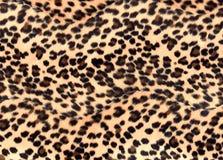 leopard τυπωμένη ύλη Στοκ εικόνα με δικαίωμα ελεύθερης χρήσης