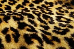 leopard τυπωμένη ύλη Στοκ Εικόνες