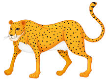 Leopard. Illustration of a leopard on a white background Stock Images