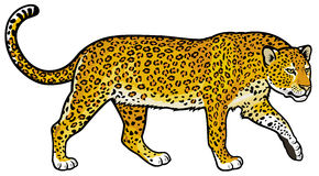 Leopard vektor illustrationer