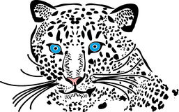 Leopard. Cat portrait tracing white wild wildcat royalty free illustration