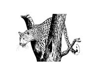 leopard stock illustrationer
