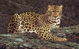 Leopard. Image from an original painting by Larry Jacobsen / A-001 royalty free illustration