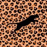 Leopard 1_1 Fotografering för Bildbyråer