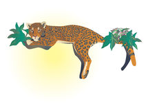 Leopard stock illustration