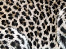Leopard. Coat texture (Panthera pardus kotiya Royalty Free Stock Photography