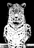 Leopard royalty free illustration