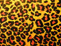 Leopard abstract Royalty Free Stock Photo