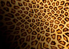 Leopard background. Abstraction fluffy background for various design artworks royalty free illustration