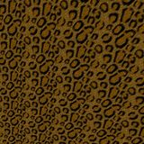 Leopard Background Stock Photography