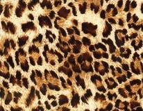 Leopard backgrounds pattern Stock Image