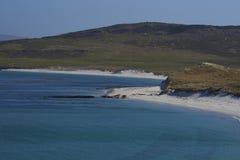 Leopard Beach - Falkland Islands Stock Photo