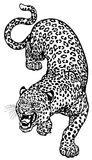 Leopard black white Royalty Free Stock Photos