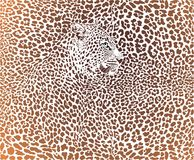 Leopard brown background Stock Images