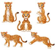 Leopard cartoon set collection Stock Image