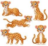 Leopard cartoon set collection Royalty Free Stock Photos