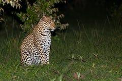 Leopard in der Dunkelheit Lizenzfreie Stockfotos