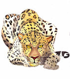 leopard för Adobekorrigeringar hög för målning för photoshop för kvalitet för bildläsning vattenfärg mycket Fotografering för Bildbyråer