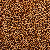Leopard fabric stock photography