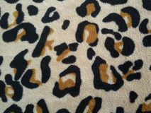 Leopard fabric wild pattern Stock Image