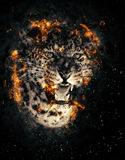 Leopard in fire. Close-up leopard portrait in fire on dark background Stock Image