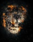 Leopard in fire Stock Image